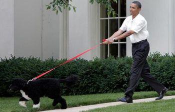 Obama-dog_1653699c
